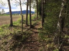 Skog og kulturlandskap Ringebu